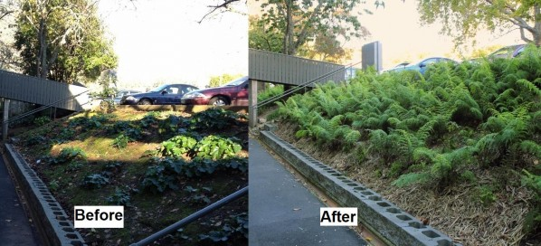 BeforeAfter_ferns.jpg